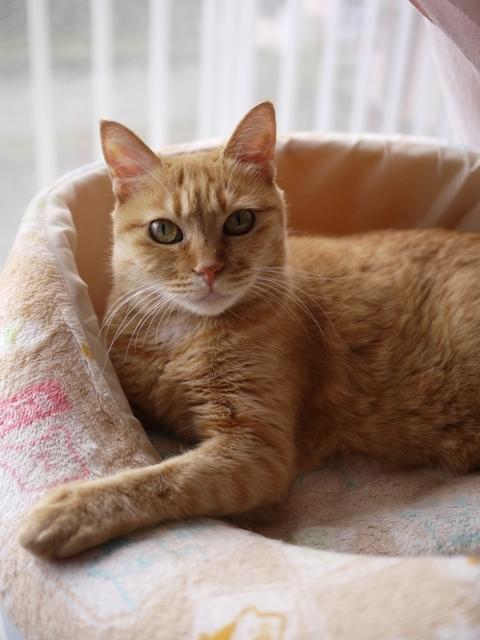 猫のお留守番 マリエちゃん編。_a0143140_19521426.jpg