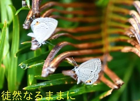d0285540_20100215.jpg