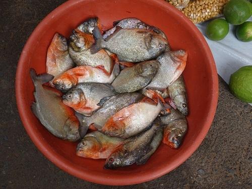 ユリマグアス市場でSUDADO DE PESCADO:魚のシチュー_c0030645_12194378.jpg