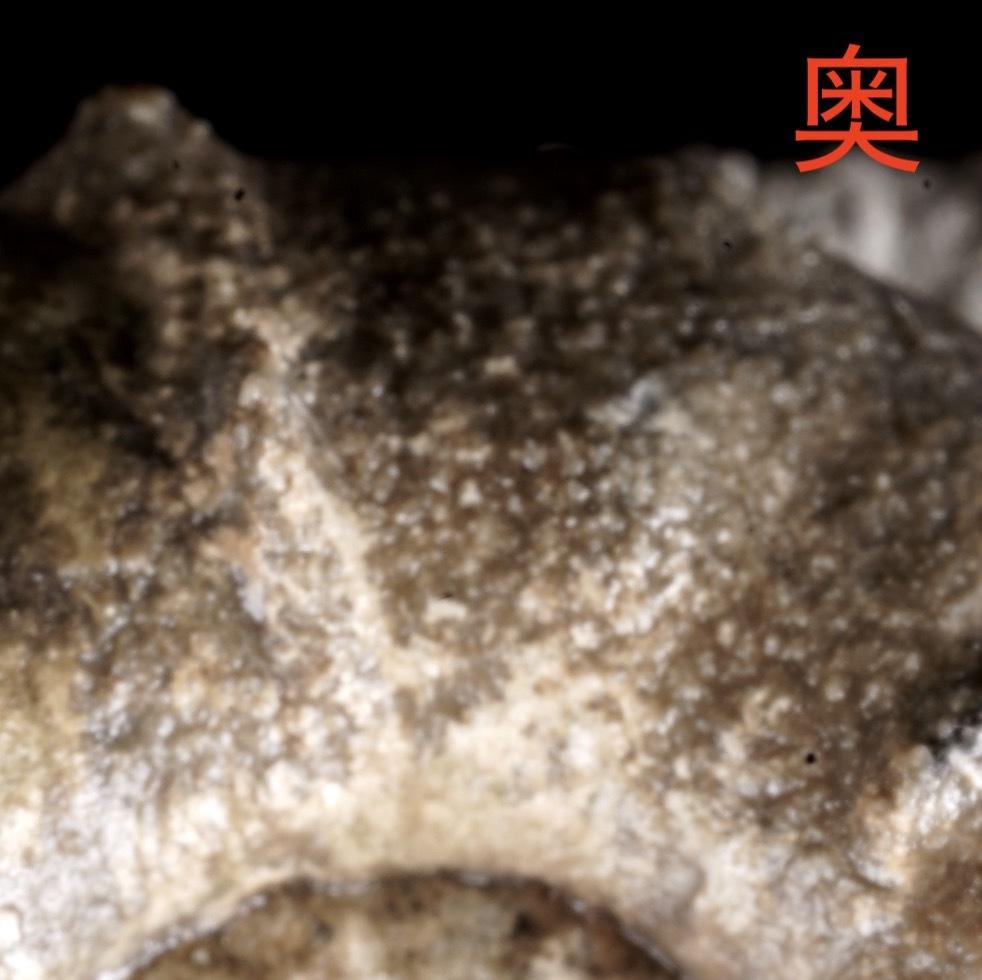 ちっさい標本の撮影・被写界深度合成_e0290546_02142419.jpg