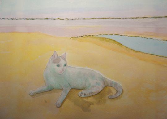 '19,10,19(土)チェニジアの砂漠の猫!_f0060461_08334522.jpg