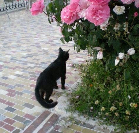 '19,10,19(土)チェニジアの砂漠の猫!_f0060461_08405840.jpg