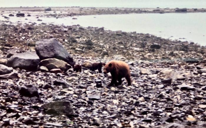 プロフィール⑧「カナダ・ログハウス修行時代」その2:〜アラスカ。自然界にお邪魔しまんねやわ〜_a0142373_12210608.jpeg