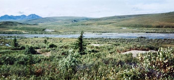 プロフィール⑦ 「カナダ・ログハウス修行時代」その1:〜とりあえずアラスカに行こう!〜_a0142373_12582888.jpeg