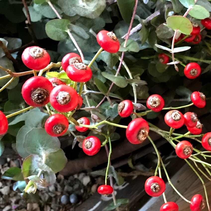 FUKUKOTOwsのご案内!「木の実や木の葉でつくるリース教室」編_e0359584_08443374.jpg