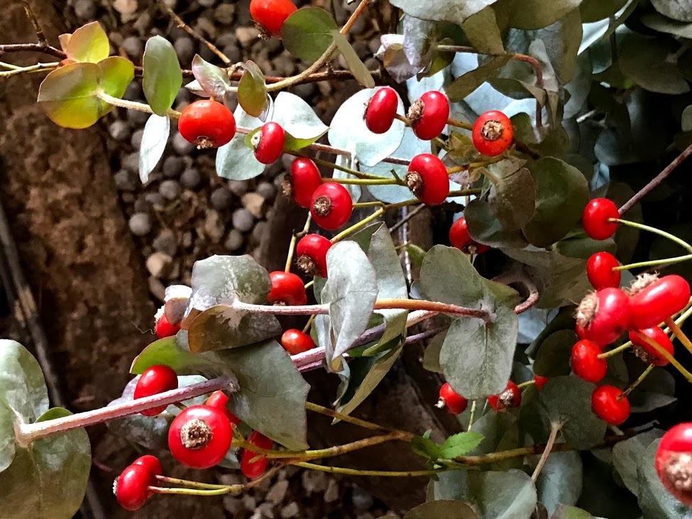 FUKUKOTOwsのご案内!「木の実や木の葉でつくるリース教室」編_e0359584_08443392.jpg