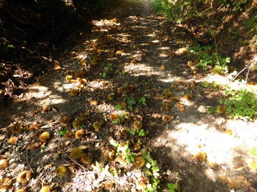 秋の実狩り_d0366590_15250723.jpg