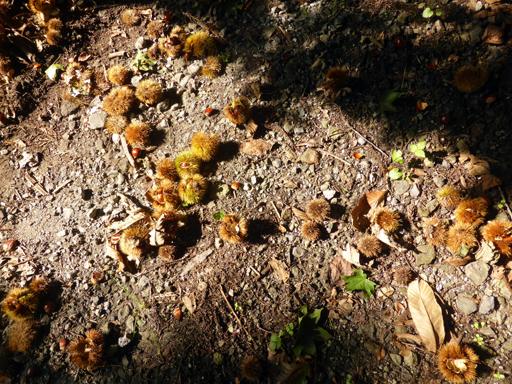 秋の実狩り_d0366590_15255218.jpg
