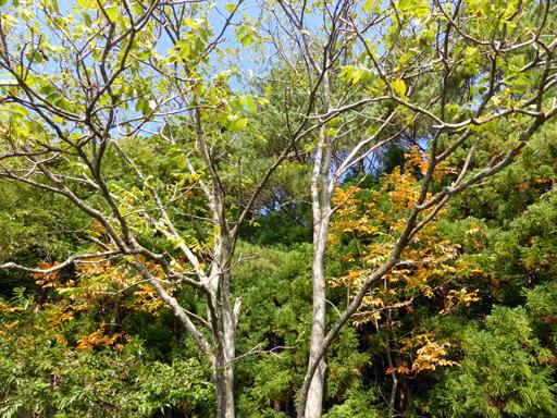 秋の実狩り_d0366590_16172999.jpg