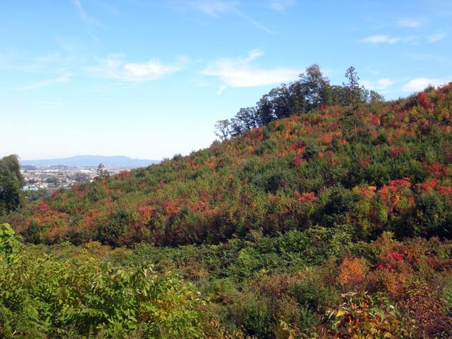 赤く色づいた岩木山と周辺の田んぼ、岩木川など_a0136293_17321508.jpg