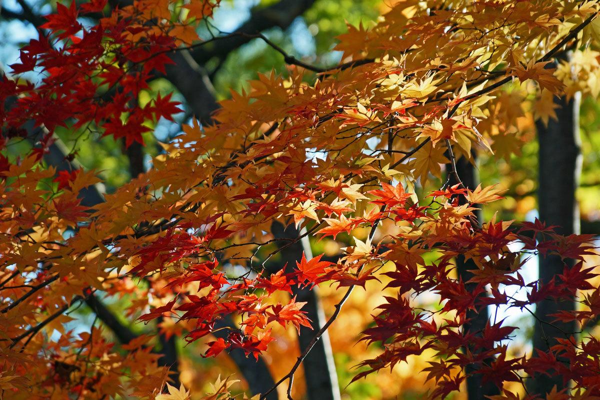 公園の紅葉_d0162994_08485248.jpg