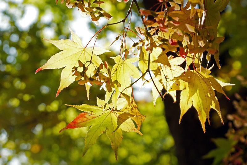 公園の紅葉_d0162994_08493681.jpg
