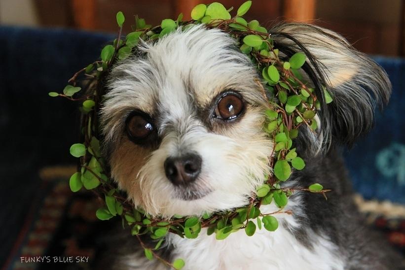 ブログテーマ「愛犬の最高にかわいいショット!!」_f0357923_18334639.jpg