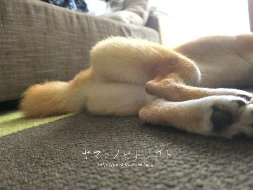 ブログテーマ「愛犬の最高にかわいいショット!!」_f0357923_18352005.jpg