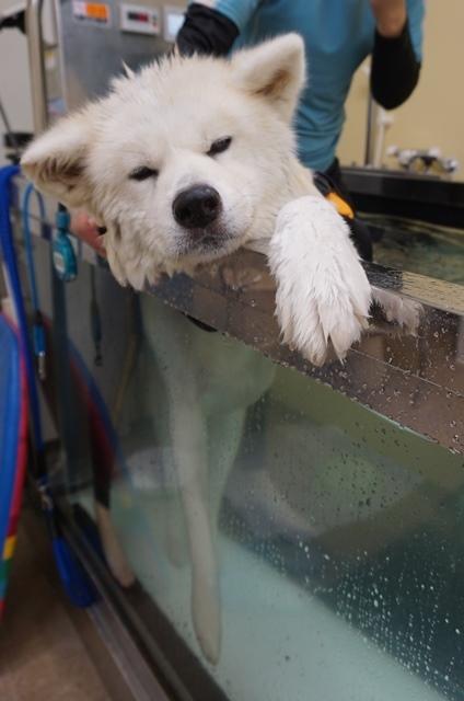 ブログテーマ「愛犬の最高にかわいいショット!!」_f0357923_18365048.jpg