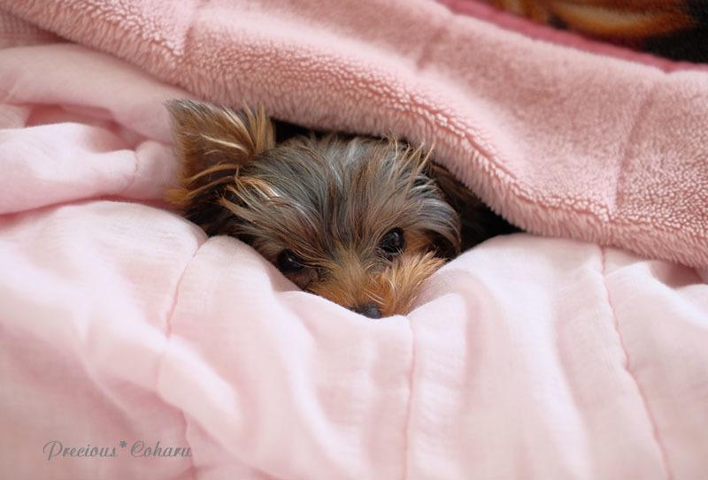ブログテーマ「愛犬の最高にかわいいショット!!」_f0357923_18375894.jpg