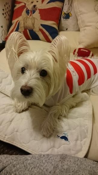 ブログテーマ「愛犬の最高にかわいいショット!!」_f0357923_18415911.jpg
