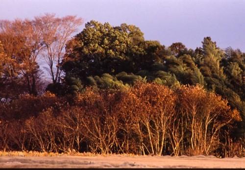 樹林の相貌_f0055131_07433430.jpg