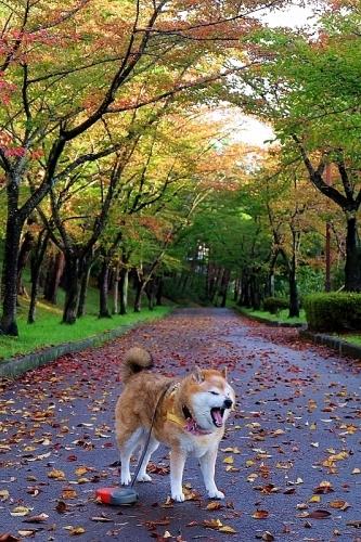 秋たけなわ_b0314043_08011739.jpg