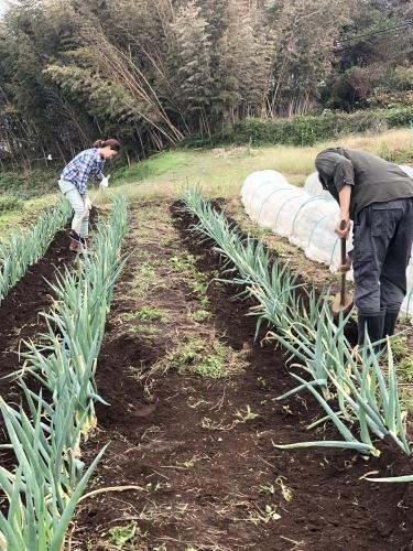 今朝は葱の土寄せ 虫退治・・・_c0222448_11555511.jpg