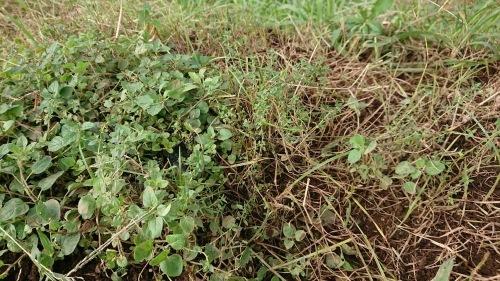 今朝は葱の土寄せ 虫退治・・・_c0222448_11573726.jpg