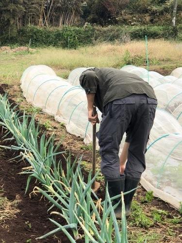 今朝は葱の土寄せ 虫退治・・・_c0222448_12011809.jpg