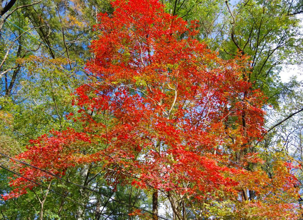 いよいよ森が色づき始めた_c0341450_10284055.jpg