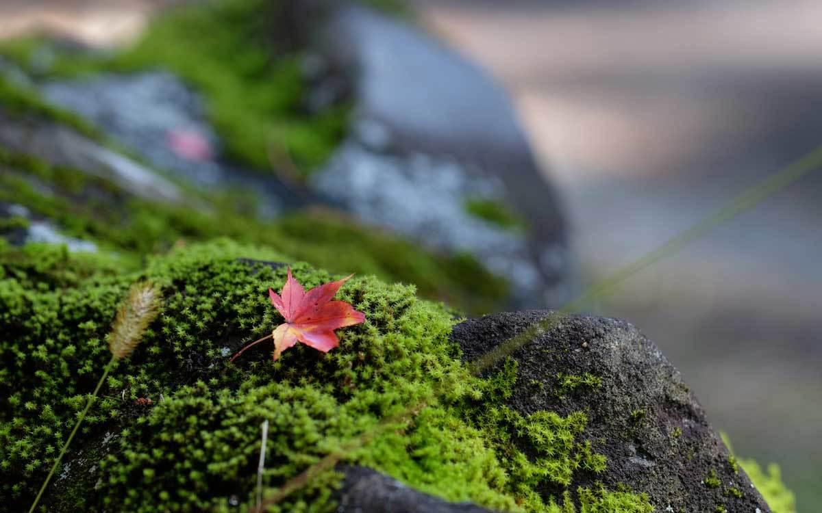浄仙寺の秋 2019_e0220159_17260115.jpg