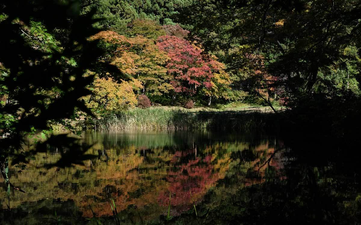 浄仙寺の秋 2019_e0220159_17261577.jpg