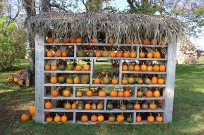 かぼちゃ_c0353373_03053722.jpg