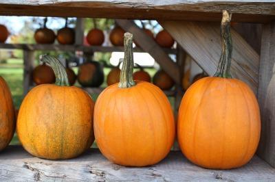 かぼちゃ_c0353373_03082178.jpg