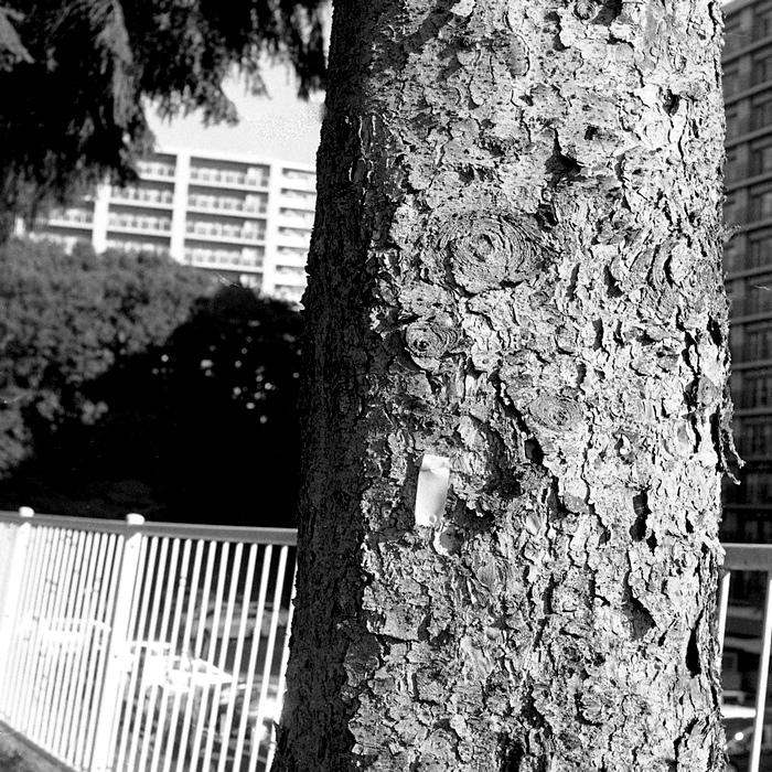 エゾ松の樹皮とボランティアのゴム手と44二眼レフ_c0182775_17415964.jpg