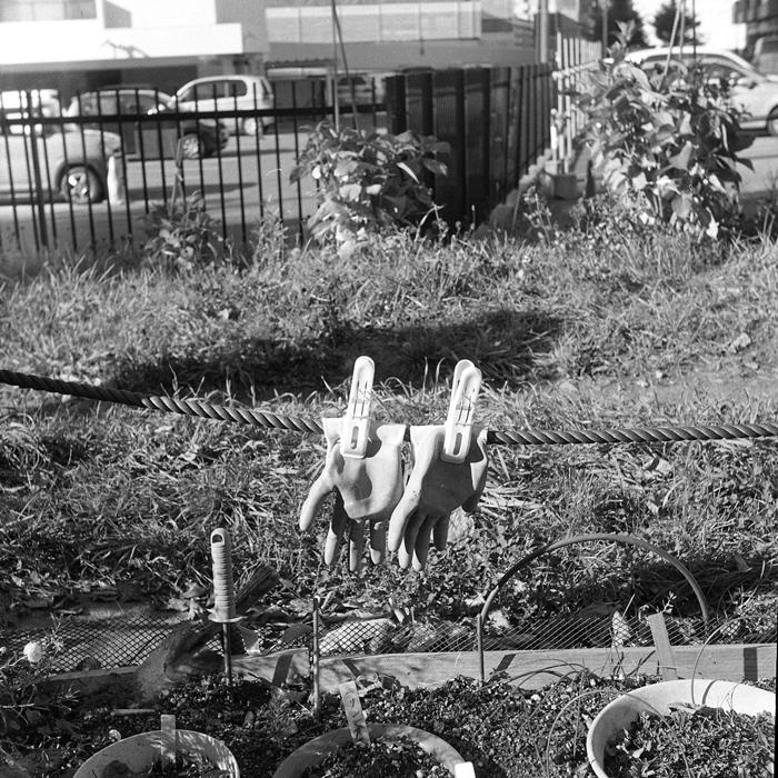 エゾ松の樹皮とボランティアのゴム手と44二眼レフ_c0182775_17443920.jpg
