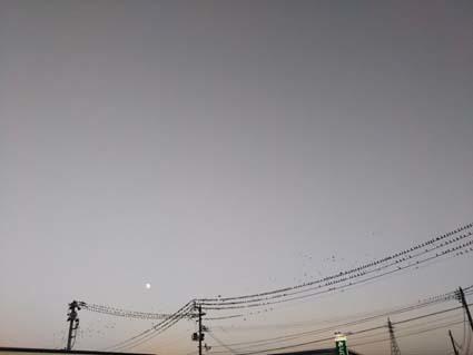 夕方の月のぼる空の鳥の群れ台風前の大騒ぎかな?_b0126182_11345431.jpg