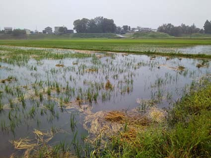 田んぼはダムの機能となり、水を溜める_b0126182_11402510.jpg