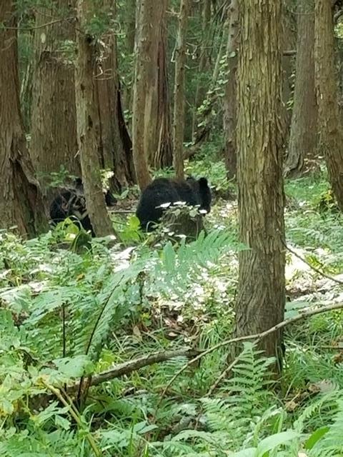 藤田八束の下北半島「奥薬研」からの報告@渡辺水産からの楽しい素敵な頼り、森の熊さんたちに逢いました・・・熊の親子にご対面_d0181492_08101981.jpg