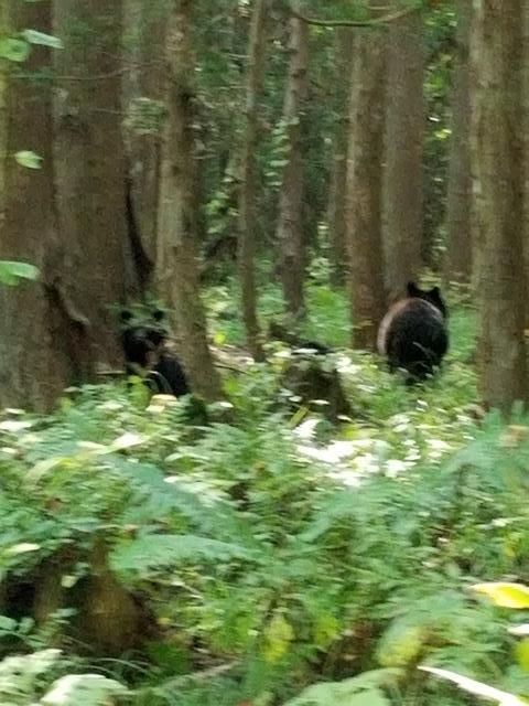 藤田八束の下北半島「奥薬研」からの報告@渡辺水産からの楽しい素敵な頼り、森の熊さんたちに逢いました・・・熊の親子にご対面_d0181492_08102743.jpg