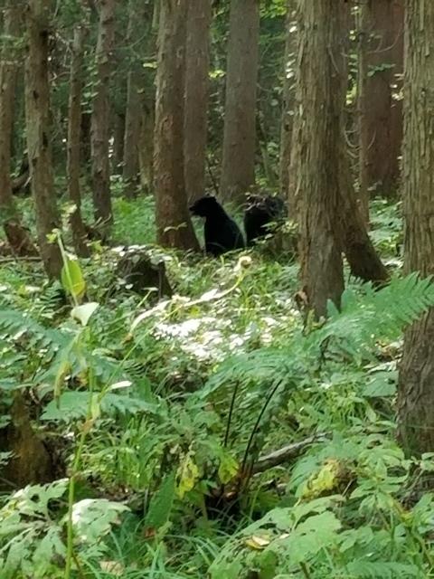 藤田八束の下北半島「奥薬研」からの報告@渡辺水産からの楽しい素敵な頼り、森の熊さんたちに逢いました・・・熊の親子にご対面_d0181492_08105566.jpg