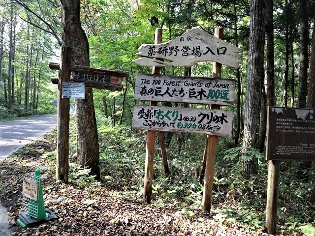 藤田八束の下北半島「奥薬研」からの報告@渡辺水産からの楽しい素敵な頼り、森の熊さんたちに逢いました・・・熊の親子にご対面_d0181492_08173983.jpg