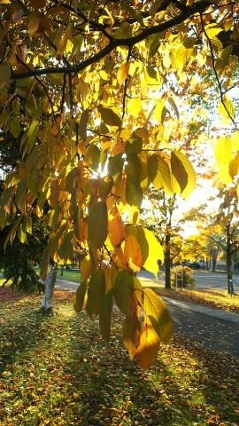 秋が・・・・_b0343293_22275680.jpg