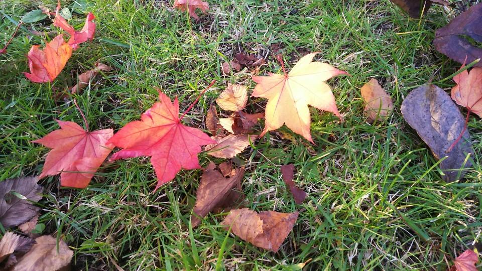 秋が・・・・_b0343293_22280788.jpg