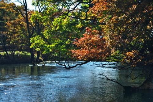 奥日光 湯ノ湖の紅葉の始まり1_a0263109_19271647.jpg