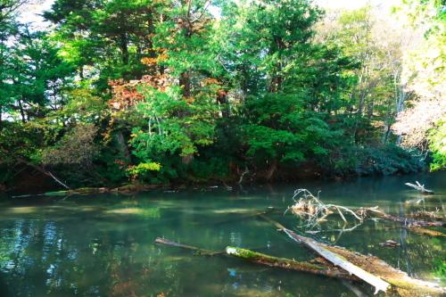 奥日光 湯ノ湖の紅葉の始まり1_a0263109_19275632.jpg