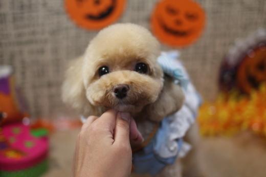 10月19日にご来店のワンちゃんです!!_b0130018_09523341.jpg