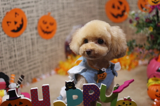 10月19日にご来店のワンちゃんです!!_b0130018_09525954.jpg