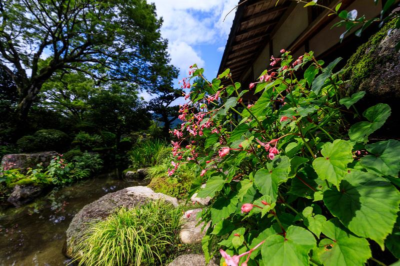 秋海棠と初秋の花々(実光院)_f0155048_23312043.jpg