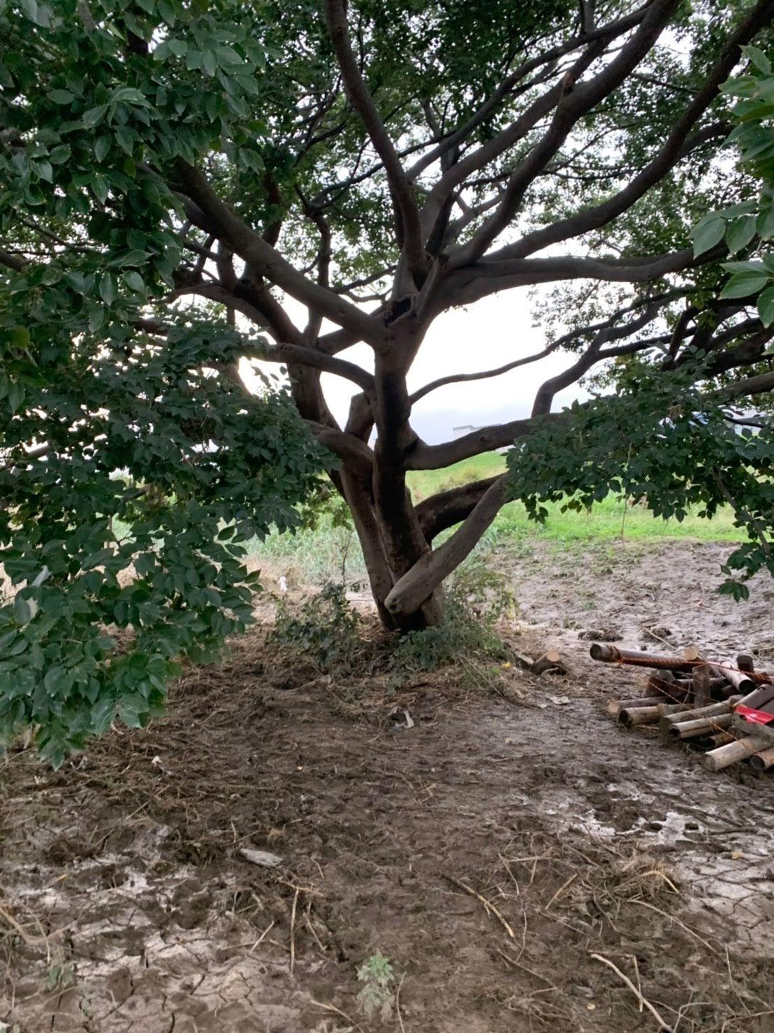 【きぬたまあそび村】10月21日(月)復旧作業とツリーハウス_c0120851_09172504.jpg