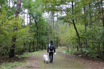 公園ハシゴ散歩_e0293553_21113341.jpg