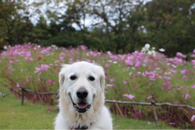 公園ハシゴ散歩_e0293553_21140338.jpg