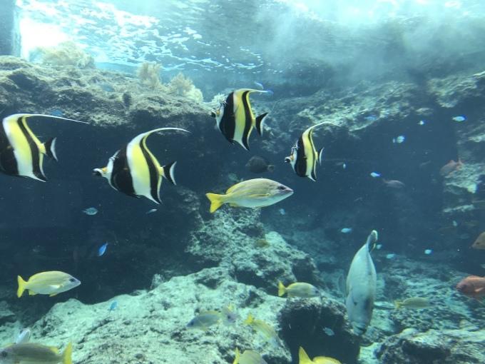沖縄の珊瑚の教会_b0100062_05233095.jpeg